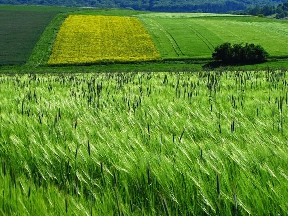 Більшість українців підтримують і мораторій, і продаж землі фото, ілюстрація