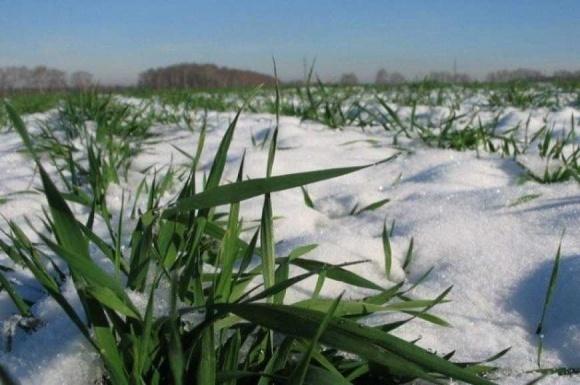 Метеорологи прогнозируют благоприятные погодные условия для озимых в феврале фото, иллюстрация