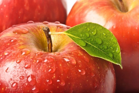 Ведущий производитель прогнозирует высокий урожай яблок фото, иллюстрация