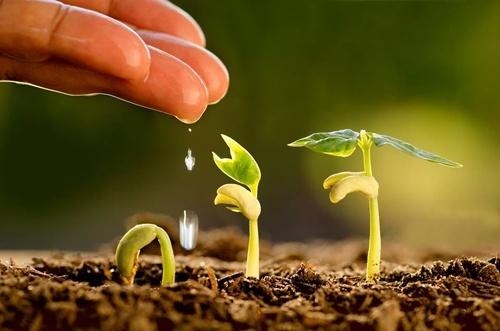 Для зернових, ріпака і борофільних культур: позакореневі підживлення для підвищення врожайності фото, ілюстрація