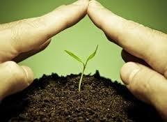 Syngenta может начать в России местное производство продуктов для защиты растений  фото, иллюстрация