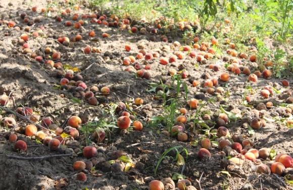 Переробники «кинули» аграрія в Одеській області фото, ілюстрація