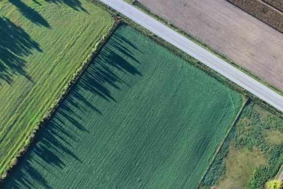 Нормативная денежная оценка земельных участков: с какого периода применяется новое решение местного совета? фото, иллюстрация