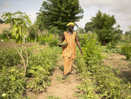 ФАО вітає знакову резолюцію ООН, в якій закріплені права фермерів та сільських робітників фото, ілюстрація