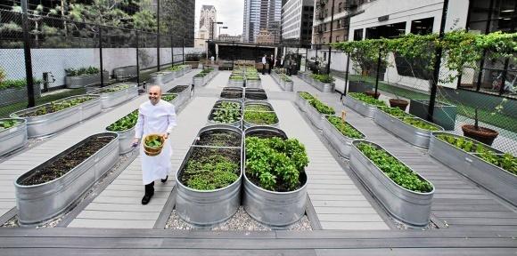 Городские фермы могут приносить до $160 млрд ежегодно фото, иллюстрация