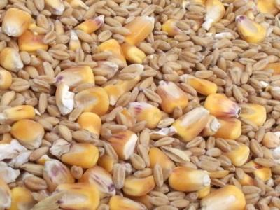 Египет продолжает занимать лидирующее место в экспорте зерна из бассейна Черного моря, в частности, из Украины фото, иллюстрация