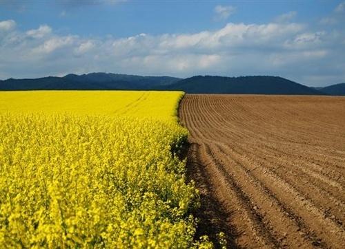Мораторий на продажу сельхозземель будет действовать до принятия закона об обороте сельхозземель, - юрист фото, иллюстрация