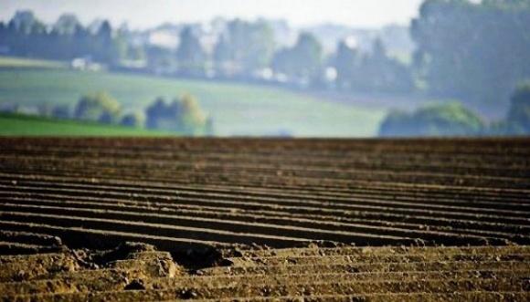 Земельні торги цьогоріч значно перевищують торішні показники - Держкадастр фото, ілюстрація