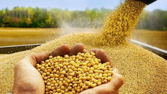 Аграрії вимагають Порошенка підписати законопроект №7403-д фото, ілюстрація