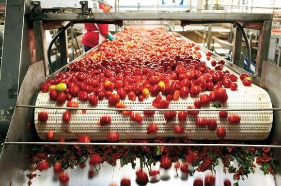 На Николаевщине компания Agrofusion запускает новую фабрику по производству томатной пасты фото, иллюстрация