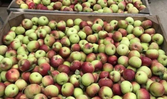 Польша подсчитывает как погода повлияла на цену фруктов фото, иллюстрация