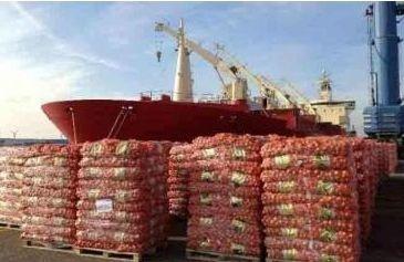 Нидерланды стали мировым лидером в экспорте лука фото, иллюстрация