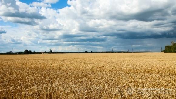 Погода - причина более половины потерь урожая фото, иллюстрация
