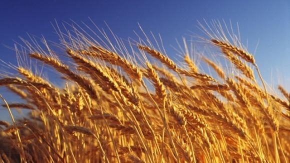 Аграрные расписки распространят на все области Украины фото, иллюстрация