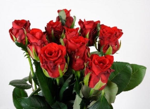 """""""Камелія"""" планує закріпитися на зовнішніх ринках за допомогою нових сортів троянд фото, ілюстрація"""