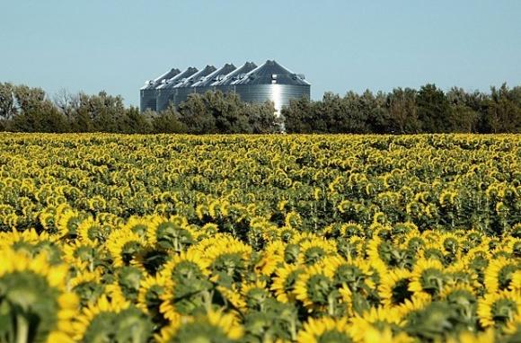«Агролига» завершает строительство маслоэкстракционного завода в Харьковской области фото, иллюстрация