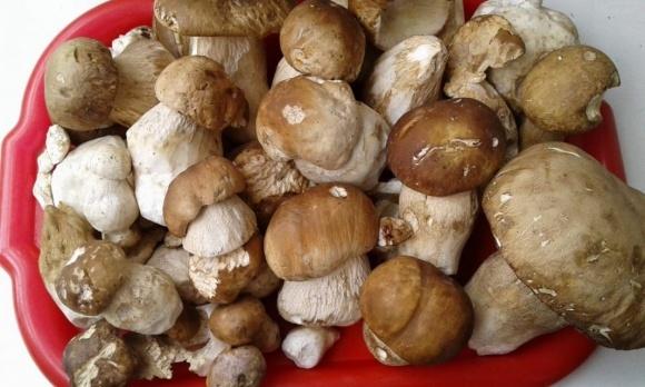 Українські фермери нарощують експорт грибів фото, ілюстрація