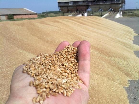 Названо області з найнижчими показниками урожайності озимої пшениці фото, ілюстрація