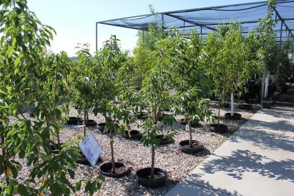 Агролайфхак: Как создать питомник растений и что выгоднее выращивать фото, иллюстрация