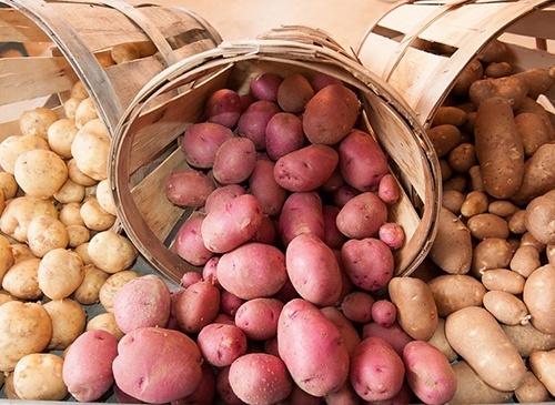 В Україні дешевшає картопля фото, ілюстрація
