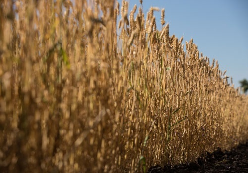 В Украине собрано 51.2 млн тонн зерна фото, иллюстрация