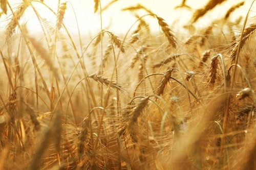 В Україні зібрано 62 млн тон зерна фото, ілюстрація
