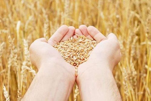 Аграрии Днепропетровской области собрали рекордный урожай зерна фото, иллюстрация
