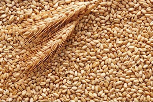 З початку 2019/20 МР Україна експортувала 18 млн тон зерна та борошна фото, ілюстрація