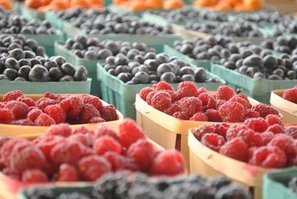 Проблеми та перспективи ягідного ринку в Україні розглядали на практикумі-дискусії фото, ілюстрація