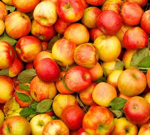 У Молдови та України з'явився конкурент на ринку яблука фото, ілюстрація