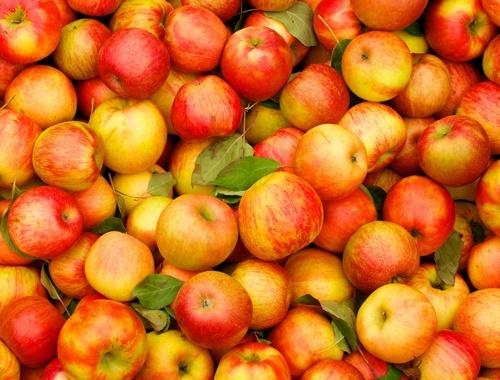 Загальний експорт українського яблука у поточному сезоні не перевищить 65 тис. тон, - Андрій Ярмак фото, ілюстрація