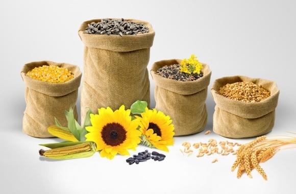 Аграрии Полтавщины  намолотили 5 млн тонн зерна фото, иллюстрация