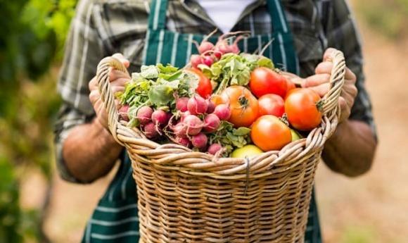 Україна має необмежені можливості в сфері органічного сільського господарства фото, ілюстрація