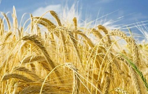 ФАО увеличила мировой прогноз производства зерновых в 2019 году до 2.7 млрд тонн фото, иллюстрация