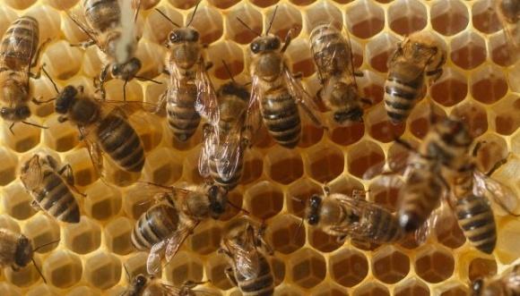 Бізнесмени за 10 млн євро збудували підприємство, яке може виробляти 16 тис тонн меду на рік фото, ілюстрація