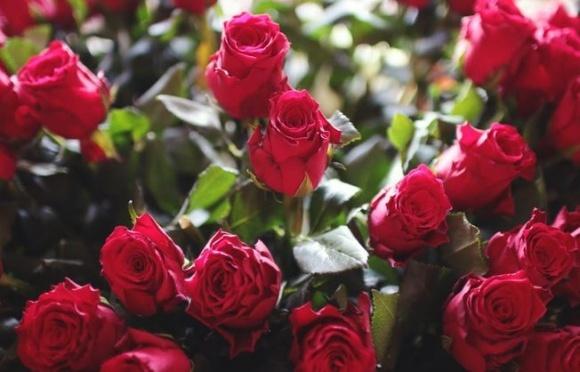 Украина нарастила импорт цветов на четверть фото, иллюстрация