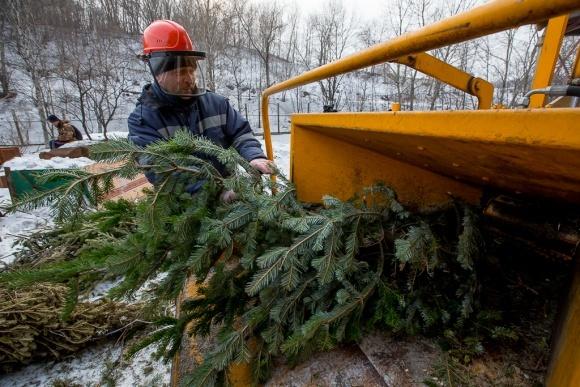 Вторая жизнь новогодней елки после праздников (Видео) фото, иллюстрация