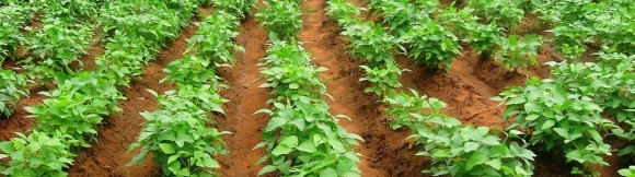 Бразилия экспортирует рекордный объем сои на фоне неурожая в Аргентине  фото, иллюстрация