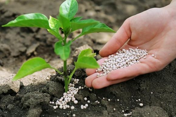 Аграрии призывают Порошенко не вводить санкции против импортных минудобрений фото, иллюстрация