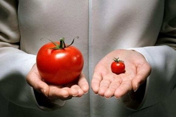 Как выглядели фрукты и овощи прежде, чем люди их одомашнили? фото, иллюстрация