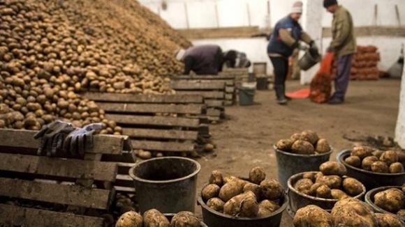Украинский экспорт картофеля в Беларусь восстановлен фото, иллюстрация