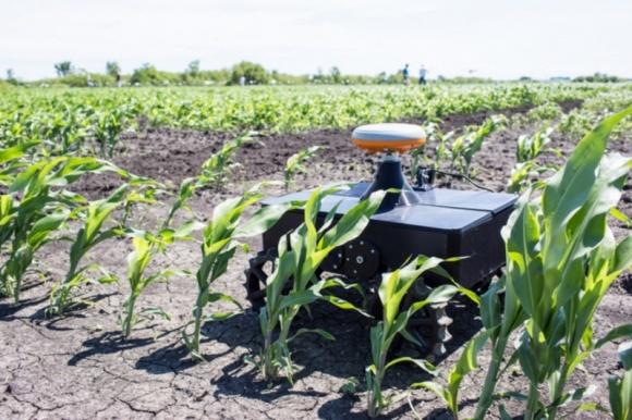 Ученые разработали агроробота, который определяет состояние кукурузы на полях фото, иллюстрация