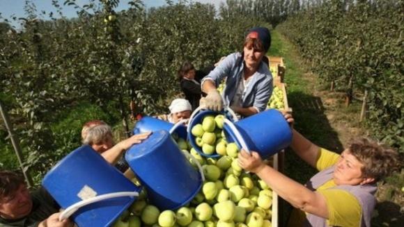 Україні вигідно, щоб громадяни виїжджали за кордон на роботу, - економіст фото, ілюстрація