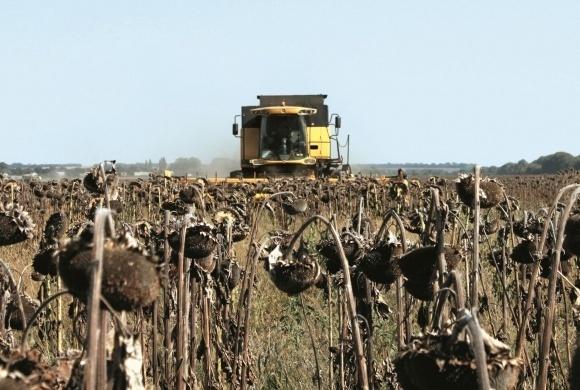 Аграрії півдня Херсонщини розчаровані врожаєм соняшнику фото, ілюстрація