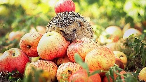 Україна вперше експортувала яблука в Сенегал, Камерун та Індонезію фото, ілюстрація