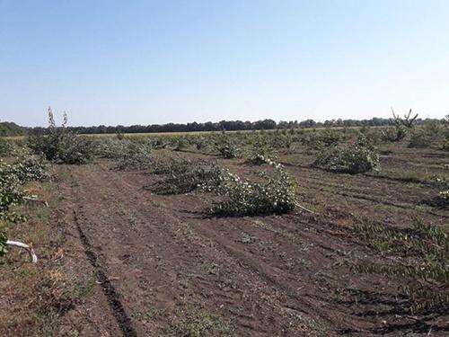 В хозяйстве фермера из Винницкой области неизвестные вырубили 5 га фруктовых деревьев фото, иллюстрация