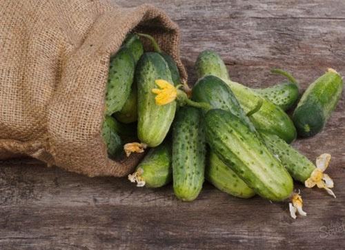 Ціни на огірки в Україні виросли після обвалу на початку тижня фото, ілюстрація