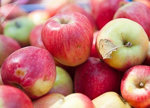В Польше прогнозируется худший урожай яблок за последние 10 лет фото, иллюстрация
