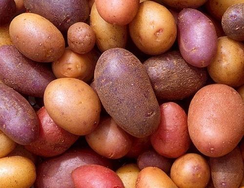 В картоплі, що надійшла з Білорусії до Києва перевищено вміст нітратів фото, ілюстрація