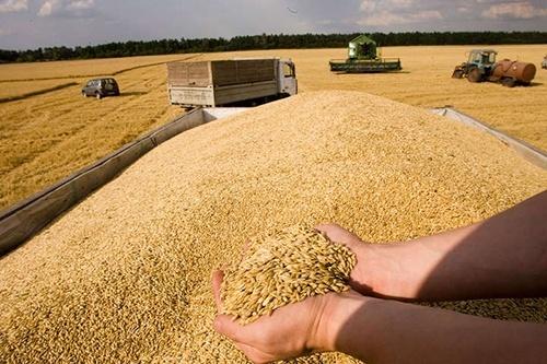 У Сумській області зернові обмолочені майже на 70% прогнозованих площ фото, ілюстрація